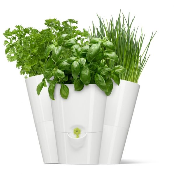 Kwiaty W Kuchni Przykładowe Aranżacje Porady Kuchenny